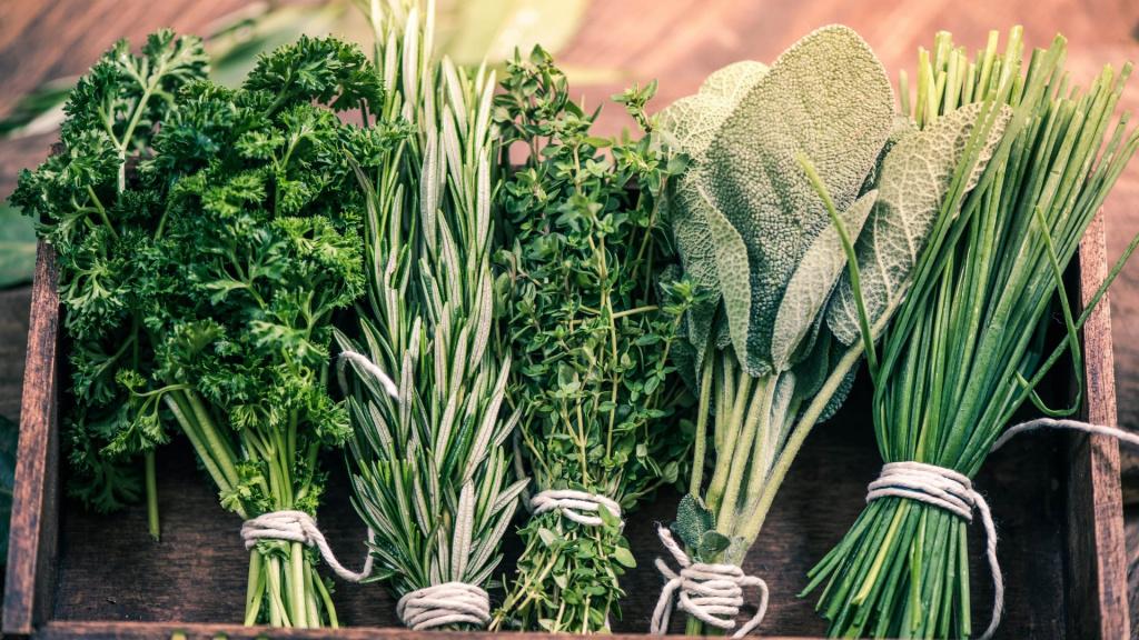 Пряные растения с картинками